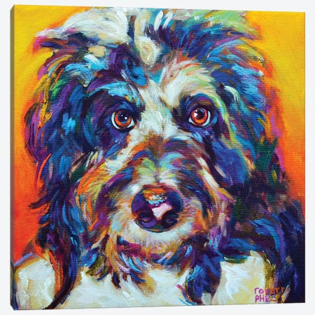 Mr Aussiedoodle Canvas Print #RPH149} by Robert Phelps Art Print