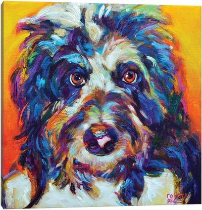 Mr Aussiedoodle Canvas Art Print