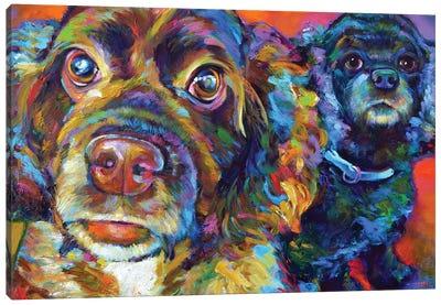 Spaniel Brothers Canvas Art Print