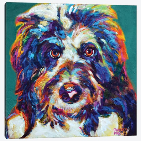 Mr Aussiedoodle On Teal Canvas Print #RPH162} by Robert Phelps Art Print