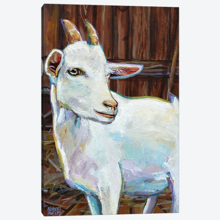 White Goat In Barn Canvas Print #RPH165} by Robert Phelps Canvas Art