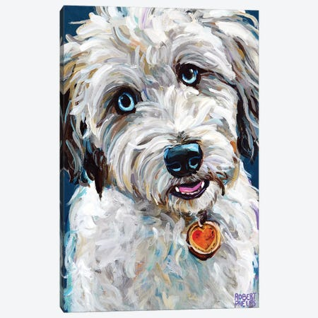 Aussiedoodle With Blue Eyes Canvas Print #RPH166} by Robert Phelps Canvas Art