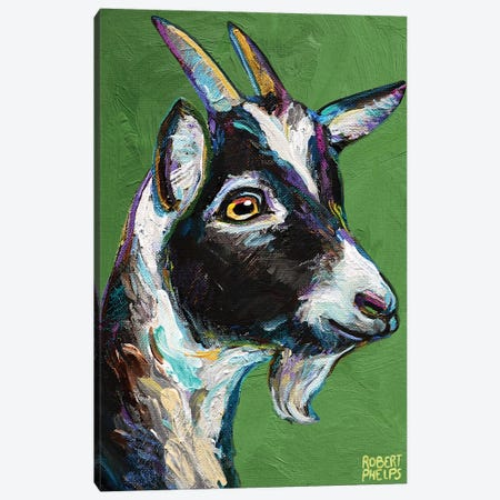 Baby Goat On Green Canvas Print #RPH167} by Robert Phelps Canvas Wall Art