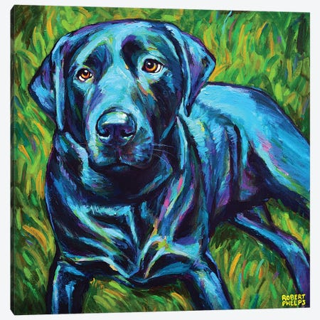 Black Lab On The Grass Canvas Print #RPH169} by Robert Phelps Canvas Art Print