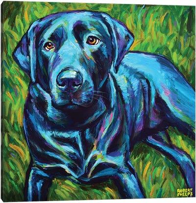 Black Lab On The Grass Canvas Art Print