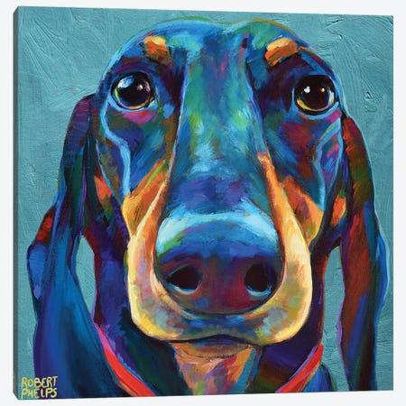Dachshund On Blue Canvas Print #RPH173} by Robert Phelps Canvas Artwork