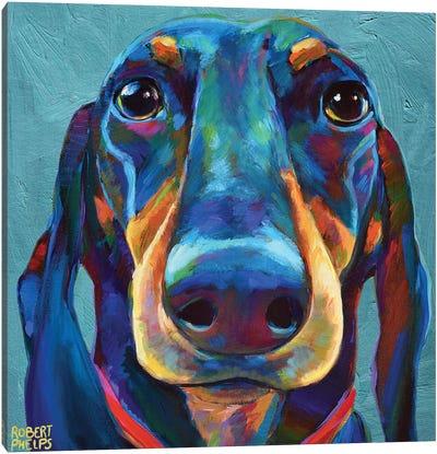 Dachshund On Blue Canvas Art Print
