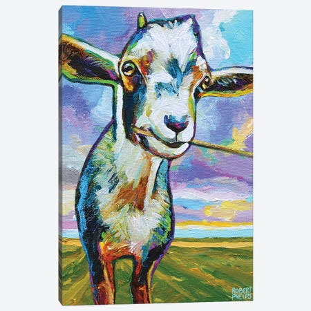 Theo The Goat In The Field Canvas Print #RPH182} by Robert Phelps Canvas Art Print