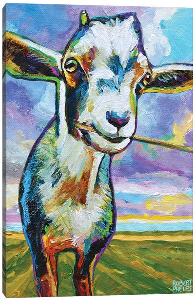 Theo The Goat In The Field Canvas Art Print