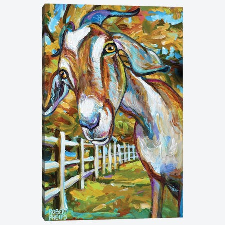 Wilbur The Goat And Fence Canvas Print #RPH185} by Robert Phelps Canvas Artwork
