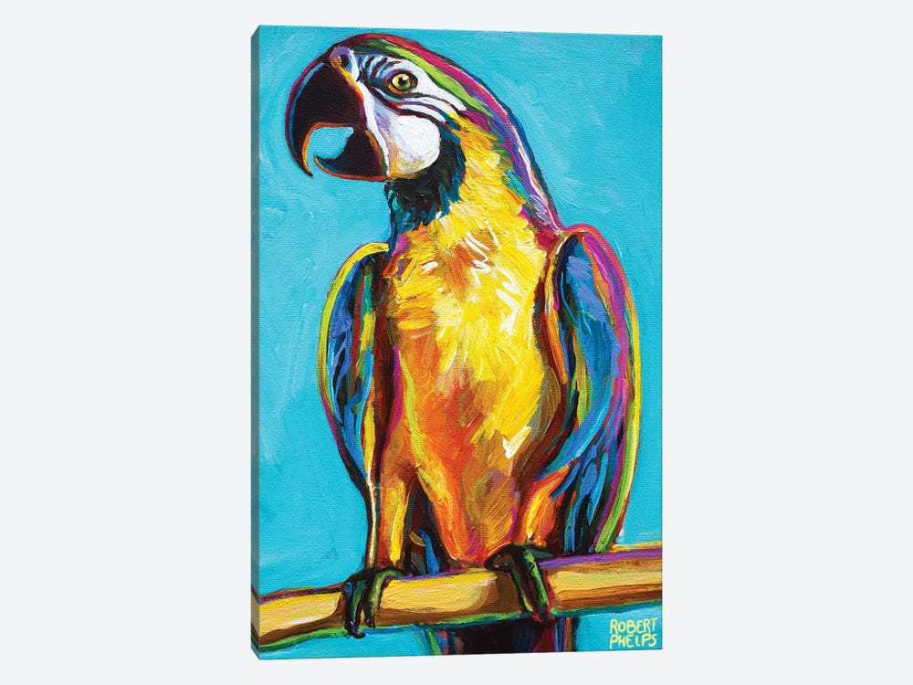 Parrot On Blue by Robert Phelps 1-piece Canvas Art Print