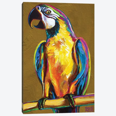 Parrot On Gold Canvas Print #RPH189} by Robert Phelps Canvas Print