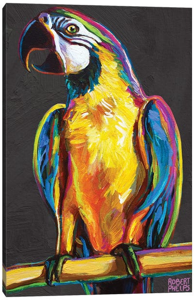 Parrot On Gray Canvas Art Print