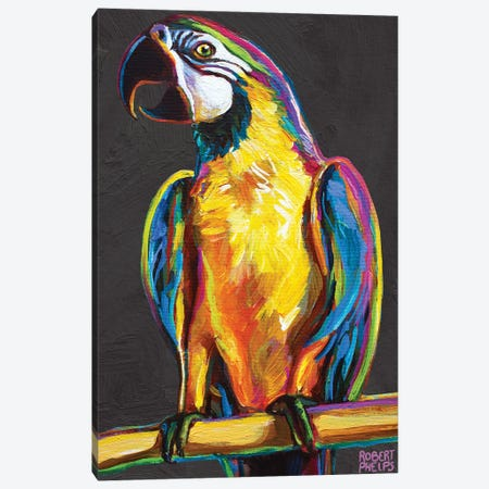 Parrot On Gray Canvas Print #RPH190} by Robert Phelps Canvas Artwork