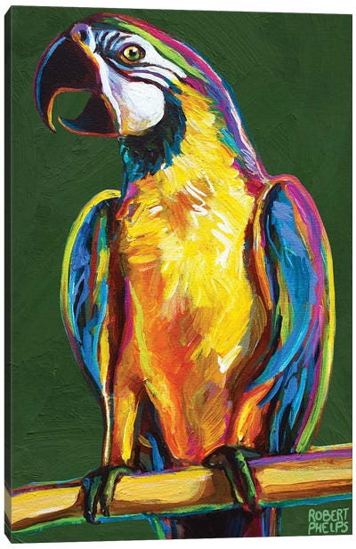 Parrot On Green Canvas Art Print