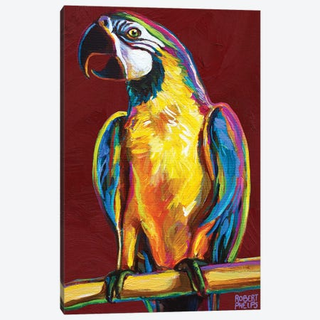 Parrot On Red Canvas Print #RPH193} by Robert Phelps Canvas Artwork