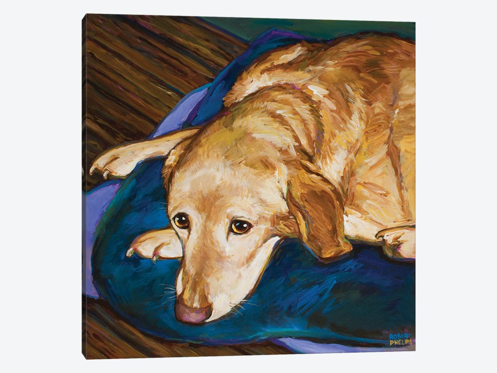 Napping Yellow Lab by Robert Phelps 1-piece Art Print