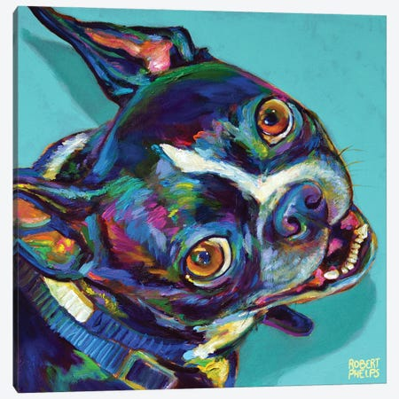 Boston Terrier On Blue Canvas Print #RPH199} by Robert Phelps Canvas Art
