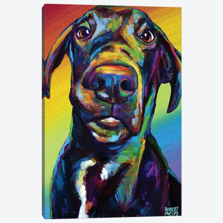 Rainbow Hank Canvas Print #RPH211} by Robert Phelps Canvas Print