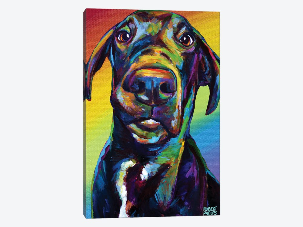 Rainbow Hank by Robert Phelps 1-piece Canvas Print