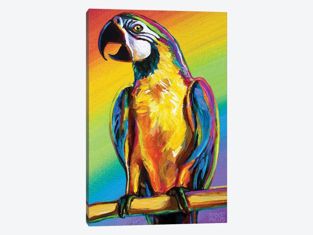 Rainbow Parrot by Robert Phelps 1-piece Canvas Artwork