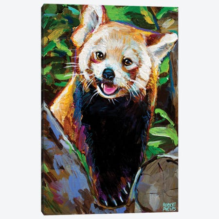 Red Panda 3-Piece Canvas #RPH213} by Robert Phelps Canvas Print