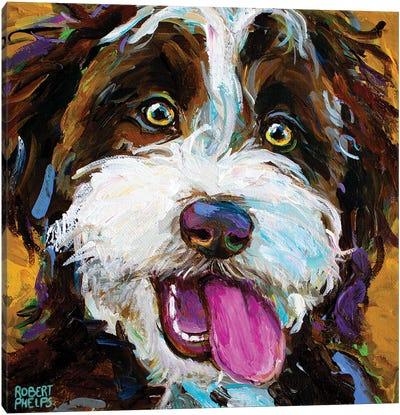 Happy Aussiedoodle II Canvas Art Print