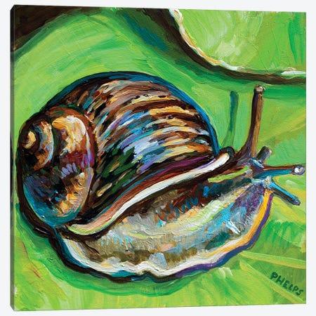 Garden Snail Canvas Print #RPH220} by Robert Phelps Canvas Artwork
