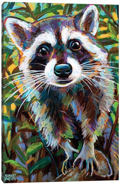 Curious Raccoon I Canvas Art Print