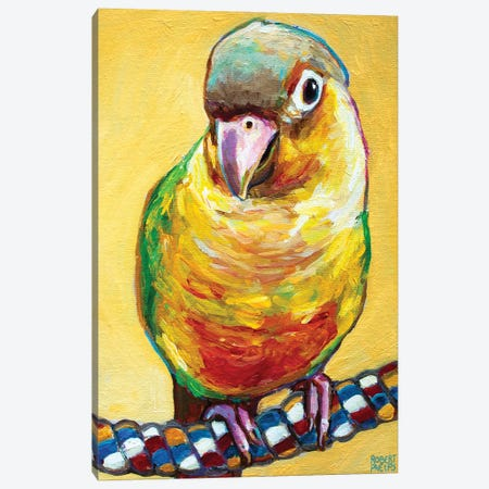 Conure On Yellow Canvas Print #RPH244} by Robert Phelps Canvas Print