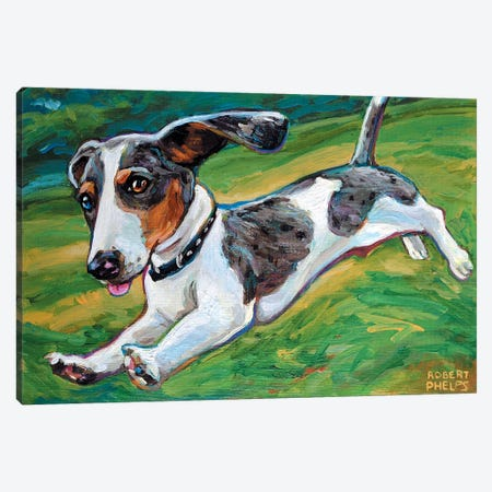 Dachshund Puppy Canvas Print #RPH24} by Robert Phelps Art Print