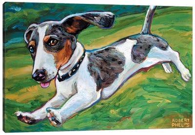 Dachshund Puppy Canvas Art Print