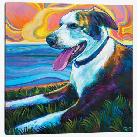Dog By Seawall Canvas Print #RPH25} by Robert Phelps Canvas Art Print