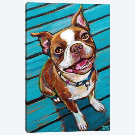 Cookie The Red Boston Terrier Canvas Print #RPH262} by Robert Phelps Canvas Artwork