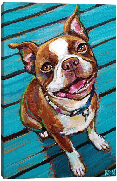 Cookie The Red Boston Terrier Canvas Art Print