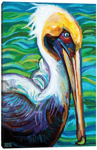 Florida Pelican Canvas Art Print
