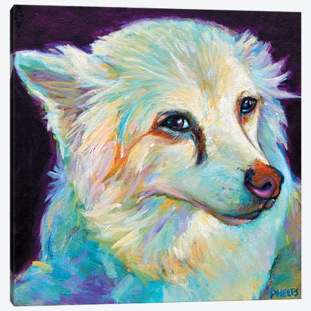 Eskimo Spitz Canvas Print #RPH27} by Robert Phelps Canvas Print