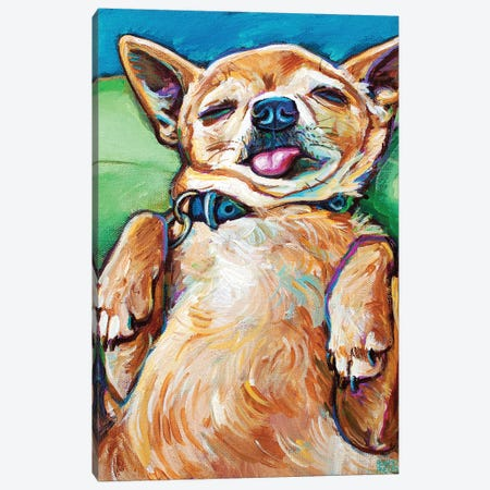 Sleepy Chihuahua II Canvas Print #RPH287} by Robert Phelps Canvas Art Print