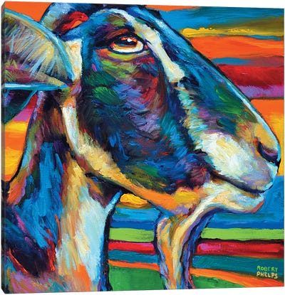 Farm Goat Canvas Art Print