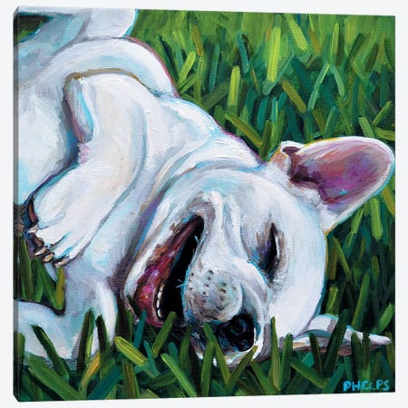 Frenchie Canvas Print #RPH31} by Robert Phelps Canvas Print