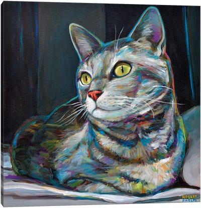 Graycat Canvas Art Print