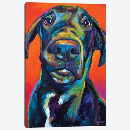Great Dane I Canvas Print #RPH35} by Robert Phelps Canvas Artwork