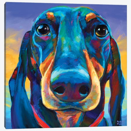 Gus The Dachshund Canvas Print #RPH40} by Robert Phelps Canvas Artwork