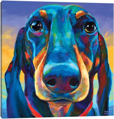 Gus The Dachshund Canvas Art Print