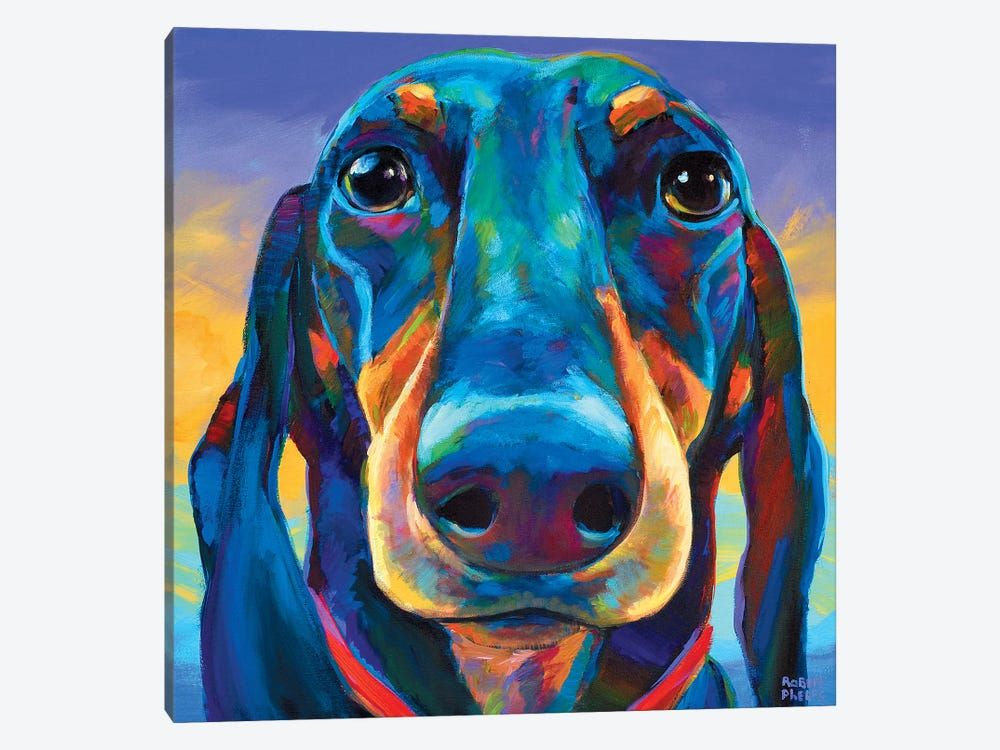 Gus The Dachshund by Robert Phelps 1-piece Canvas Wall Art