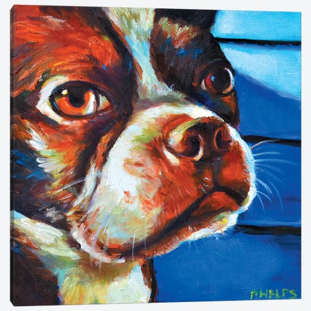 Hank The Boston Terrier Canvas Print #RPH42} by Robert Phelps Canvas Wall Art