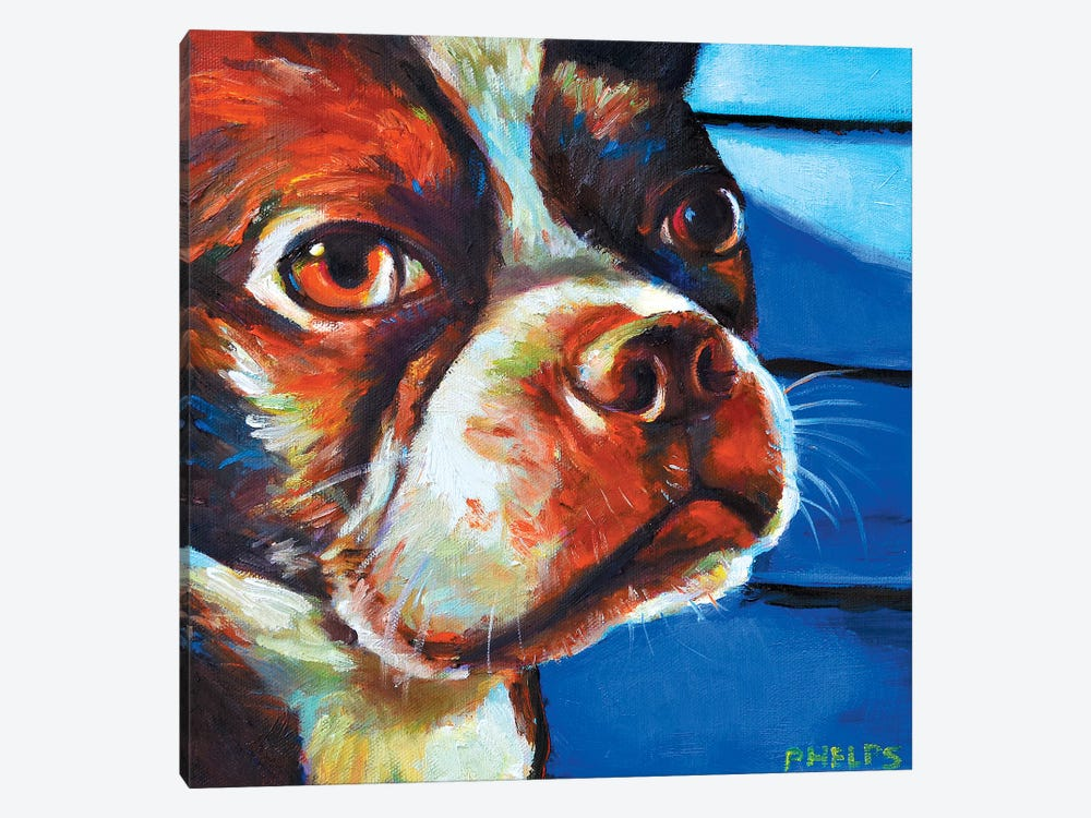 Hank The Boston Terrier by Robert Phelps 1-piece Canvas Artwork