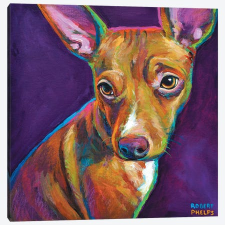 Jack The Chihuahua Canvas Print #RPH43} by Robert Phelps Canvas Artwork