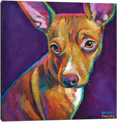 Jack The Chihuahua Canvas Art Print