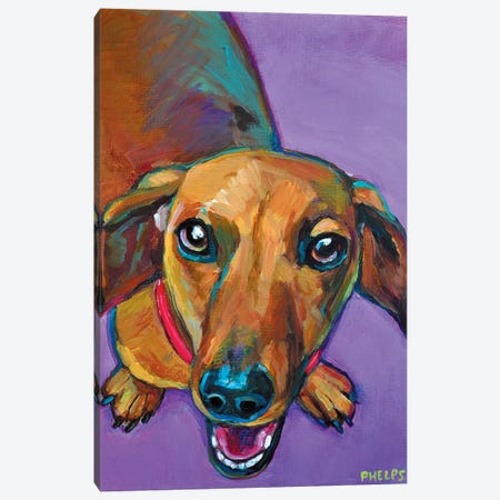 Lucy The Dachshund Canvas Print #RPH47} by Robert Phelps Canvas Art Print